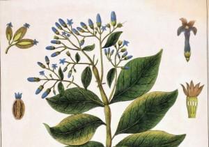 Gintonic-para-combatir-la-malaria-2
